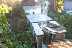 抽烟在蜂房copyspace季节性蜂蜜蜂养蜂业方面的蜂吸烟者种田有机产品导致概念 免版税库存照片