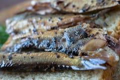 抽烟用木沙丁鱼开胃菜 库存照片