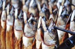 抽烟的鱼 库存图片