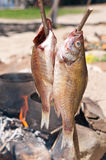 抽烟的鱼 免版税库存图片