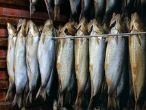 抽烟的鲱鱼腌鱼 库存照片