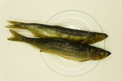 抽烟的鲱鱼 两条盐鲱鱼用在黑板背景的柠檬 免版税库存照片