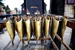 抽烟的鲱鱼 免版税图库摄影