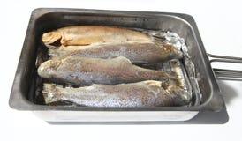 抽烟的鳟鱼 免版税库存图片
