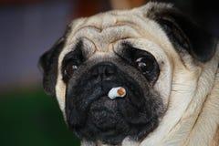 抽烟 免版税库存照片