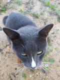 抽猫 免版税库存照片