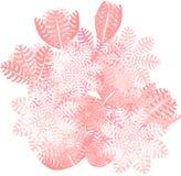 抽的齐尼亚珊瑚 库存照片