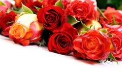 抽签玫瑰 图库摄影