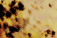 抽象万圣夜背景,巫婆女巫在万圣夜夜 库存图片