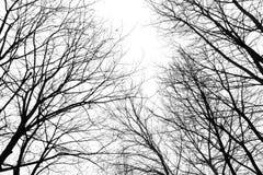 抽象不生叶的树枝在冬天 免版税库存照片
