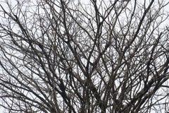 抽象不生叶的树枝 免版税库存图片