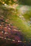 抽象五颜六色的万维网 免版税库存图片