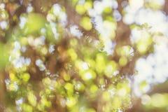 抽象五颜六色的叶子和阳光在背景中 焦点透镜迷离 免版税库存图片