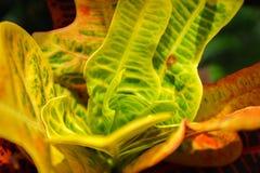抽象五颜六色的叶子样式和纹理特写镜头为摘要和设计使用 库存照片