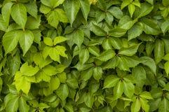 抽象五颜六色的鲜绿色的叶子 免版税库存图片