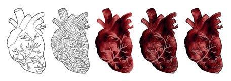 抽象人的心脏,低多 免版税图库摄影