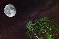抽象例证闪电夜空 库存图片