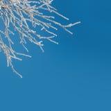 抽象冬天背景-积雪的冰冷的白色分支 免版税库存图片