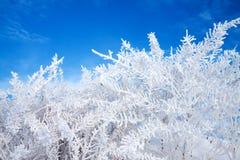 抽象冬天背景 库存照片