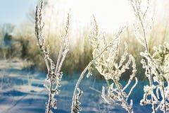 抽象冬天迷离背景 包括的工厂雪 免版税库存照片