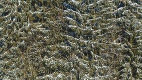 抽象冬天 免版税库存图片