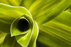 抽象叶子工厂 库存图片