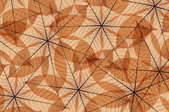 抽象叶子概要 图库摄影