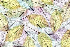 抽象叶子概要 免版税库存照片