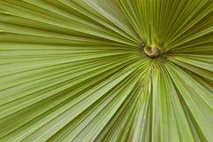 抽象叶子矮棕榈条 免版税图库摄影