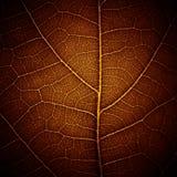 抽象叶子纹理静脉 免版税库存图片