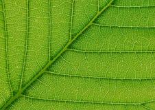 抽象叶子结构纹理 库存图片