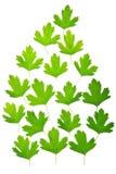 抽象叶子绿色组 图库摄影