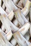 抽象吠声棕榈,棕榈树背景纹理树干细节  免版税库存图片