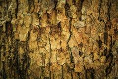 抽象吠声纹理木头 库存图片