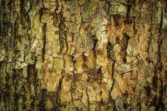 抽象吠声纹理木头 库存照片