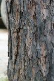 抽象吠声纹理木头 免版税库存照片