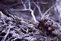抽象吠声结构树 免版税库存照片