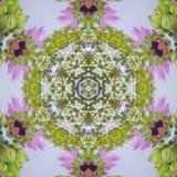 抽象圆的花花圈用欧蓍草冬葵离开并且发芽 库存图片