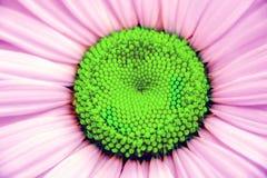 抽象在最小的超现实主义样式与生动的时尚颜色,自然夏天背景的春黄菊花宏观植物照片 库存图片