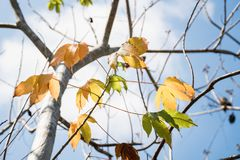 抽象在蓝天背景的迷离干燥叶子 库存照片