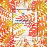 抽象夏天框架留下居住珊瑚和黄色颜色背景的自然 r 皇族释放例证