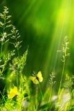抽象夏天花卉绿色自然背景 免版税库存图片