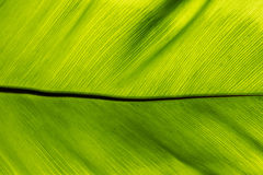 抽象大绿色叶子 免版税库存图片