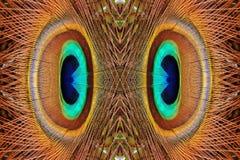 抽象孔雀用羽毛装饰样式 免版税图库摄影