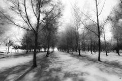 抽象小组杉树黑白背景 免版税库存图片
