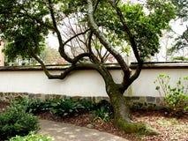 抽象形状结构树 免版税库存照片