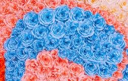 抽象彩虹五颜六色的玫瑰花纸背景 图库摄影