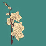 抽象招呼背景看板卡高雅花卉的花grunge例证邀请仿造减速火箭的玫瑰样式华伦泰葡萄酒婚礼 在难看的东西减速火箭的样式的问候 高雅样式开花玫瑰, il 库存图片