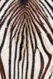 抽象斑马 库存照片