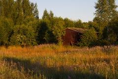 抽象早晨自然夏天墙纸 免版税库存照片